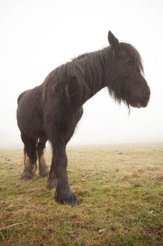 Photo of a horse taken from close up using a short focal length (24mm) lens