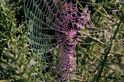 Spider's web covered in water droplets from fog, gleaming in the sun