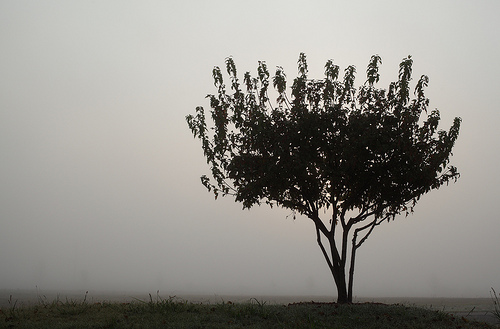 Tree in Fog minimalist photo
