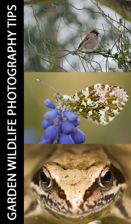 Garden Wildlife Photography Tips
