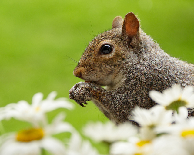 Squirrel eating a nut in a garden