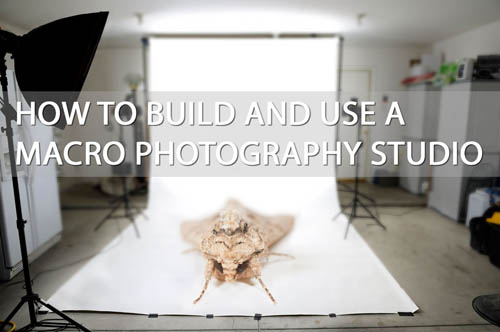 How to build and use a macro photography studio