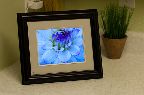 Digital Photo frame displaying a flower photo
