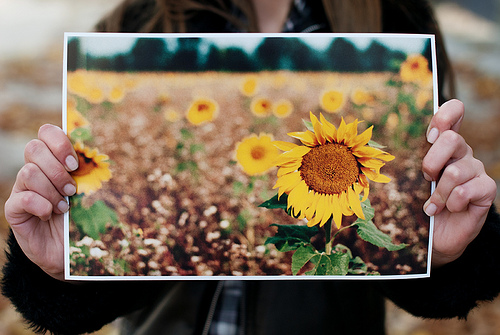 Person holding up a print of a photo of sunflowers