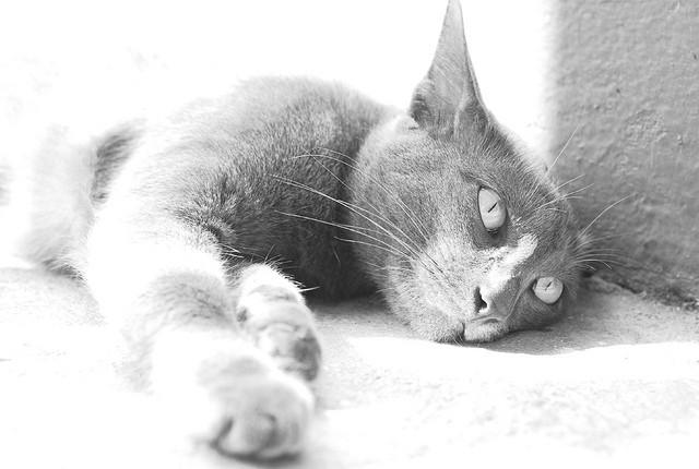 Accidental high key cat photo