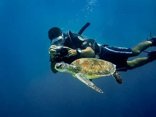 Photographing Turtles