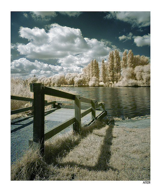 False color infrared photo of a lake with trees on the opposite side and a blue sky spotted with cumulus clouds
