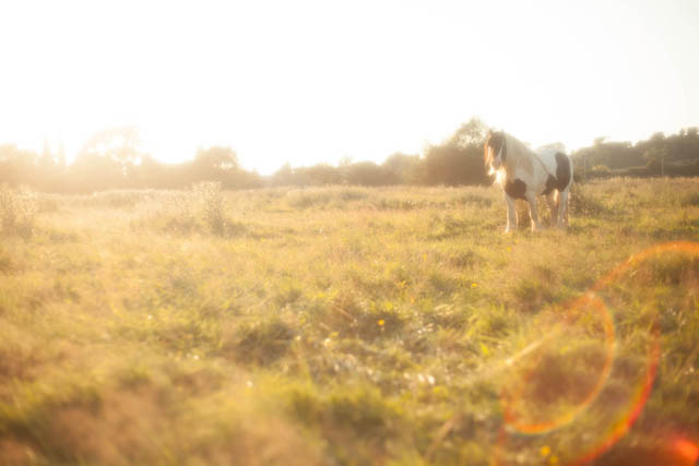Backlit photo of a horse in a field taken using a soft focus filter
