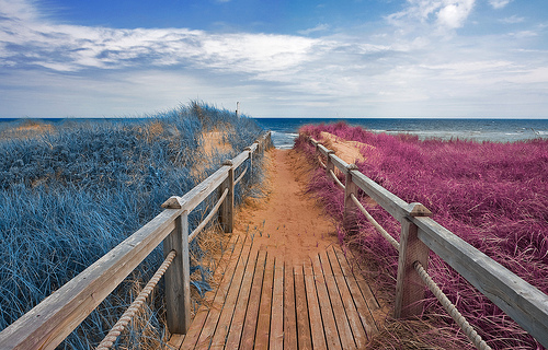 Split Tone Beach Boardwalk - Blue & Pink grass modified color image