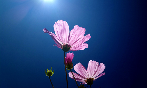 Purple flowers against a blue sky - example of using analogous colors in photography