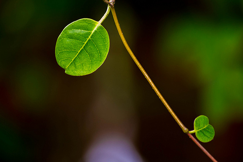 Green leaves with shallow depth of field and blurred background minimalistic photo
