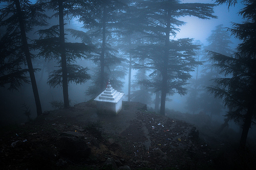 The path out of Dharamsala - wooded mnountainside in the mist