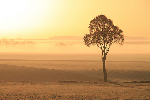 Photo of a lone tree in the warm light of sunrise