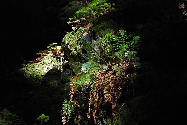 fern in the spotlight