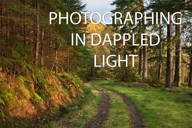 Photographing in dappled light