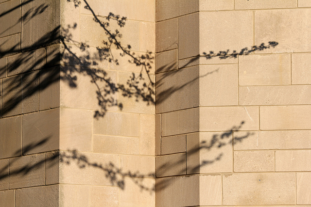Tree branch shadows on an uneven wall