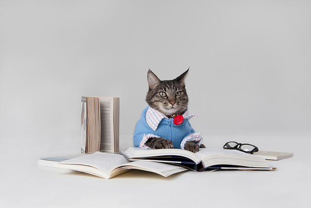 Max the Brown Tabby Cat reading Books