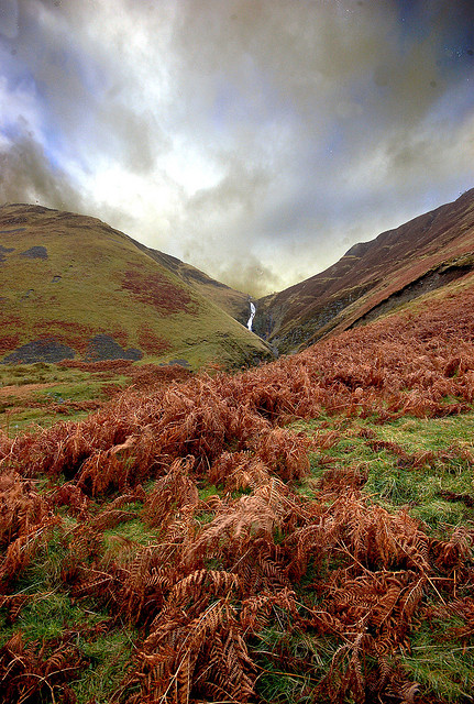 HDR Landscape - Ferns in the foreground provide foreground interest. The image also makes strong use of shapes with the way the ferns and hills cut diagonally across the image in different directions.