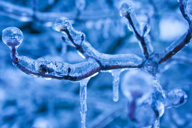 Ice on a branch. The image has a cold blue color, created by using a tungsten white balance but shooting in daylight