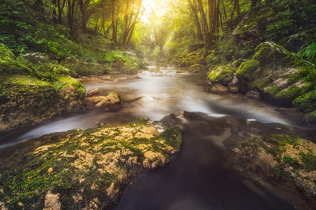 River running through rainforest in Manoa. A polarizing filter used to reduce reflections (leading to stronger color) and lengthen exposure time