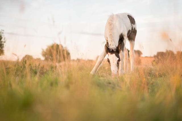 Photo of horse foal where the foal is in focus