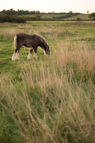 Photo of a foal, loosely framed with lots of field around them