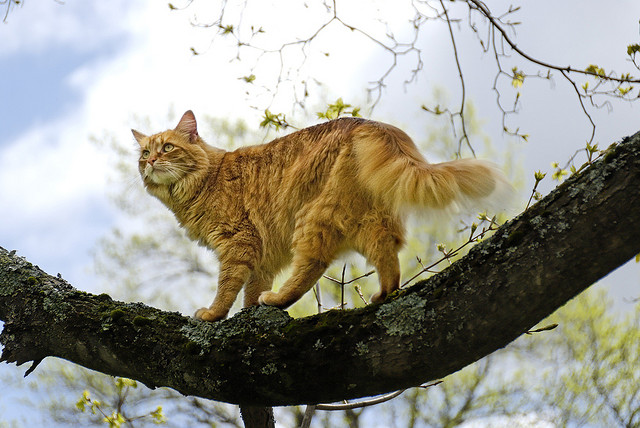 Cat walking on a tree branch. RAW conversion with DXO, edited further in GIMP