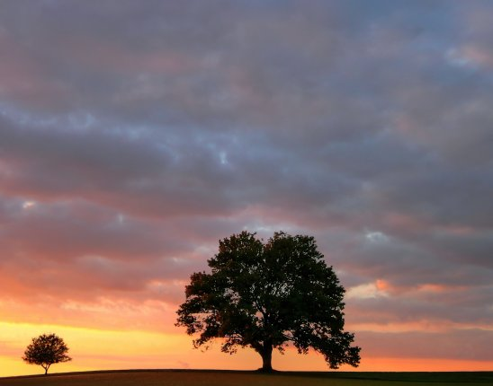 big and little trees silhouetted against a sunset sky