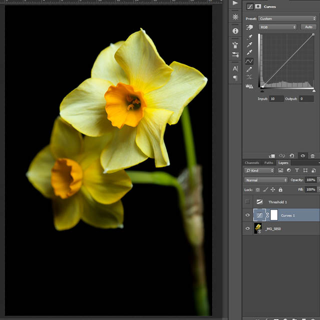 Image after hiding the threshold layer, showing daffodil flower with pure black background behind it