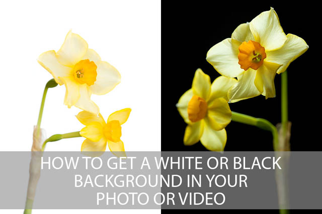 How to get a white or black background in your photo or video