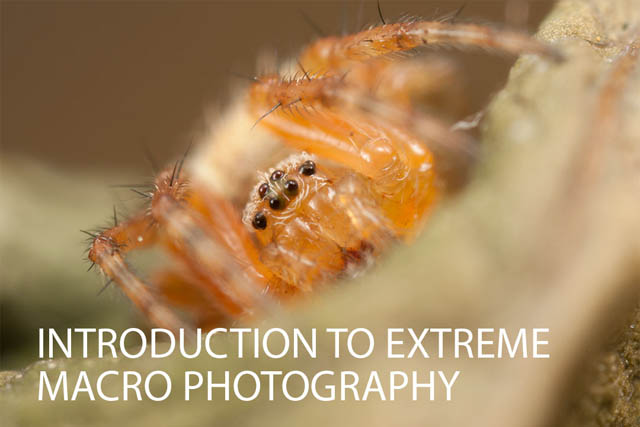 Introduction to Extreme Macro Photography