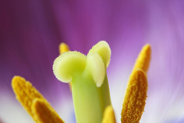 extreme macro of the center of a flower captured using extension tubes and a 28-80mm macro lens