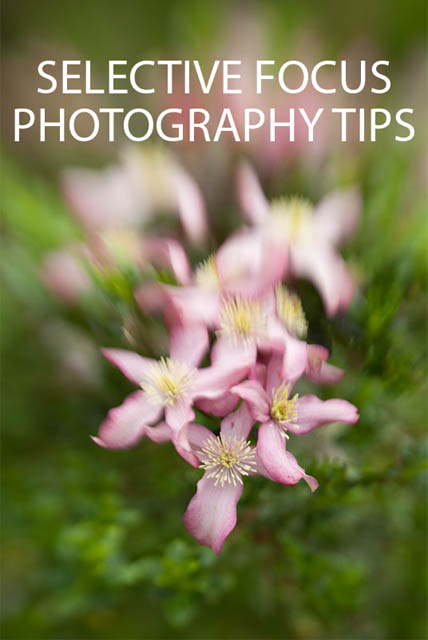 Selective Focus Photography Tips
