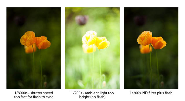 Images showing the use of an ND filter to allow using flash with a large aperture setting. The image on the left shows the correct exposure without flash, which was taken at a shutter speed of 1/8000s - far faster than the camera's maximum flash sync speed. The middle image was taken at 1/200s - the camera's maximum flash sync speed. The image is greatly over-exposed even without the flash firing. The right image was taken at 1/200s also, but a neutral density filter was used to reduce the exposure. The image is not overexposed and flash was able to be used to light the flowers.