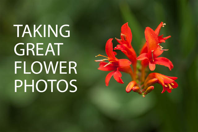 Taking Great Flower Photos