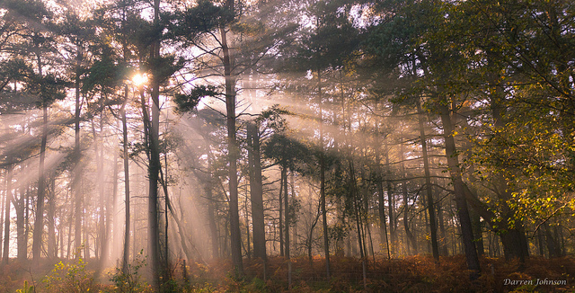 Shafts of light split by trees, showing up due to smoke-filled air