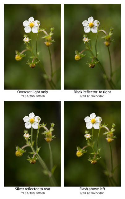 Comparison of a wild Strawberry flower photographed in overcast light only (top left), with a black 'reflector' on the right (top right), with a silver reflector behind right (bottom left) and with flash (bottom right).