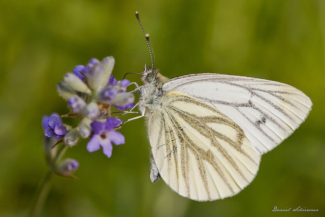 Butterfly, taken with a DSLR camera and 105mm macro lens