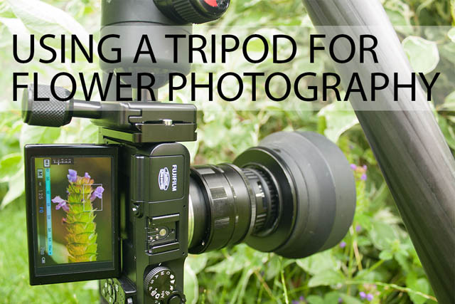 Using a tripod for flower photography