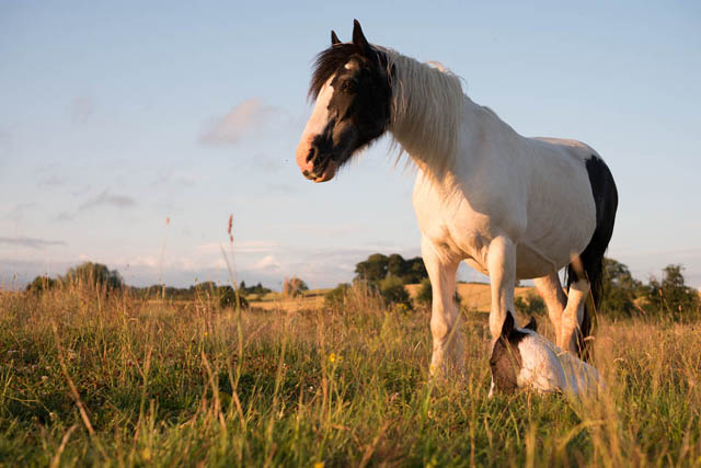 Photo of horse and young foal, shot away from the sun. The sky and horse are both exposed correctly.