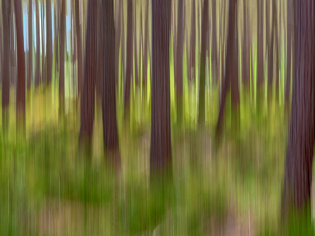 Woodland impressions - painterly long exposure image created by panning camera up and down while photographing trees