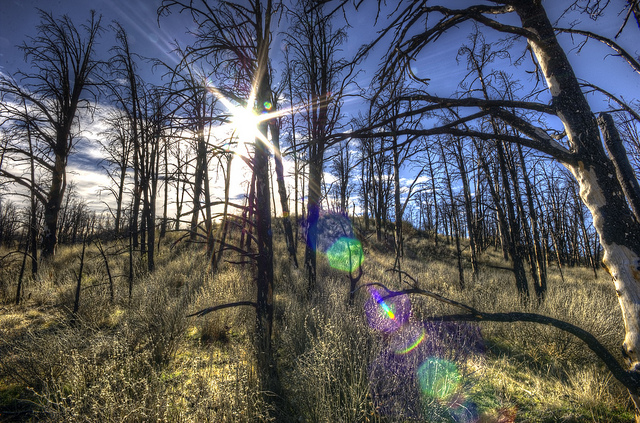 Photo of a forest with colored blobs lens flare caused by shooting into the sun