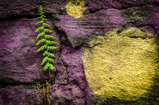 A green fern growing against a purple and yellow wall - an example of the kind of details photo that can easily be overlooked