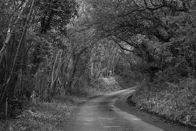 Photo of road from a challenge that involved using a 50mm focal length, shooting in black and white, and no post processing.