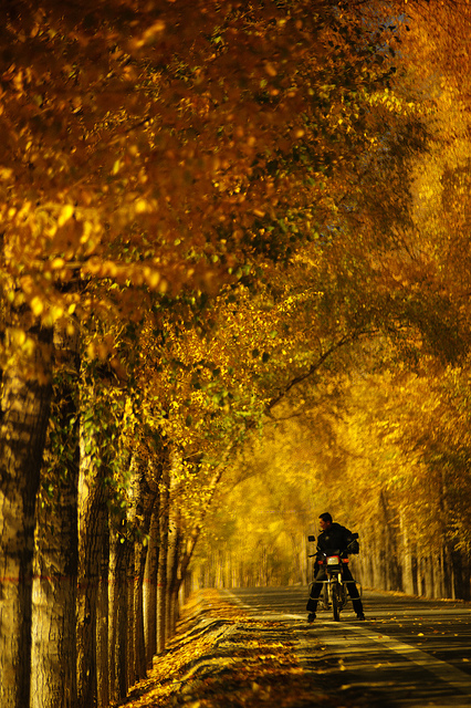 Photo of a motorcyclist stopped on a forest road in Fall, taken with a telephoto focal length