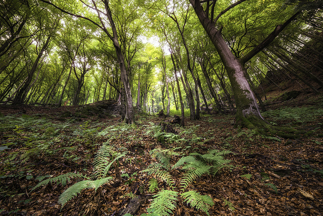 magic forest - taken with a wide angle focal length