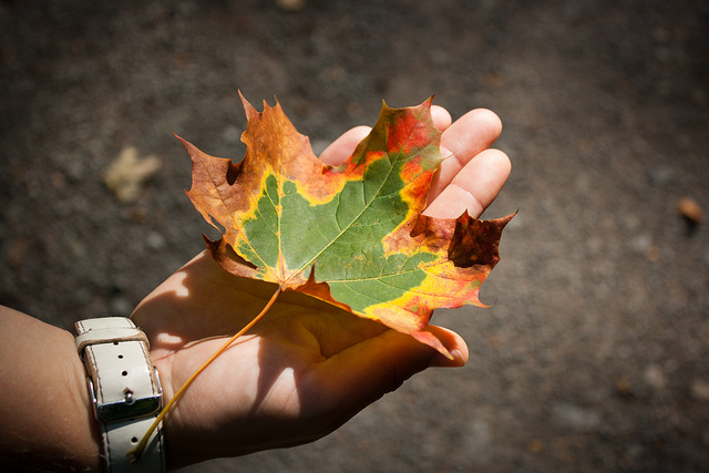 Photo of autumnal leaf in a hand. The image has a vignette (darkened corners), drawing your view towards the leaf at the center of the frame.