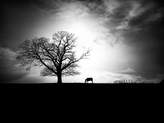 High contrast Black and White Landscape with Horse