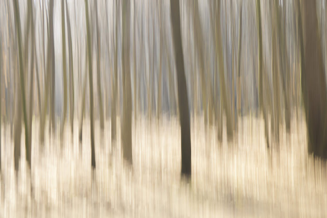 Artistic blurred photo of trees taken by moving the camera during a long exposure