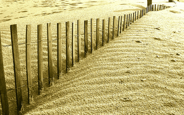 A fence sticking up through a sand dune, covered by sand to varying degrees.